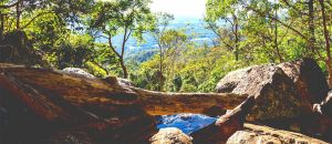 Dentist in Melbourne Partner Accommodation Mount Tamborine