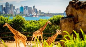 Dentist in Melbourne Partner Attractions